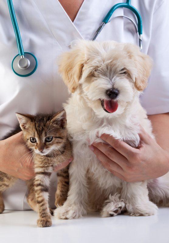 spirulina for dogs