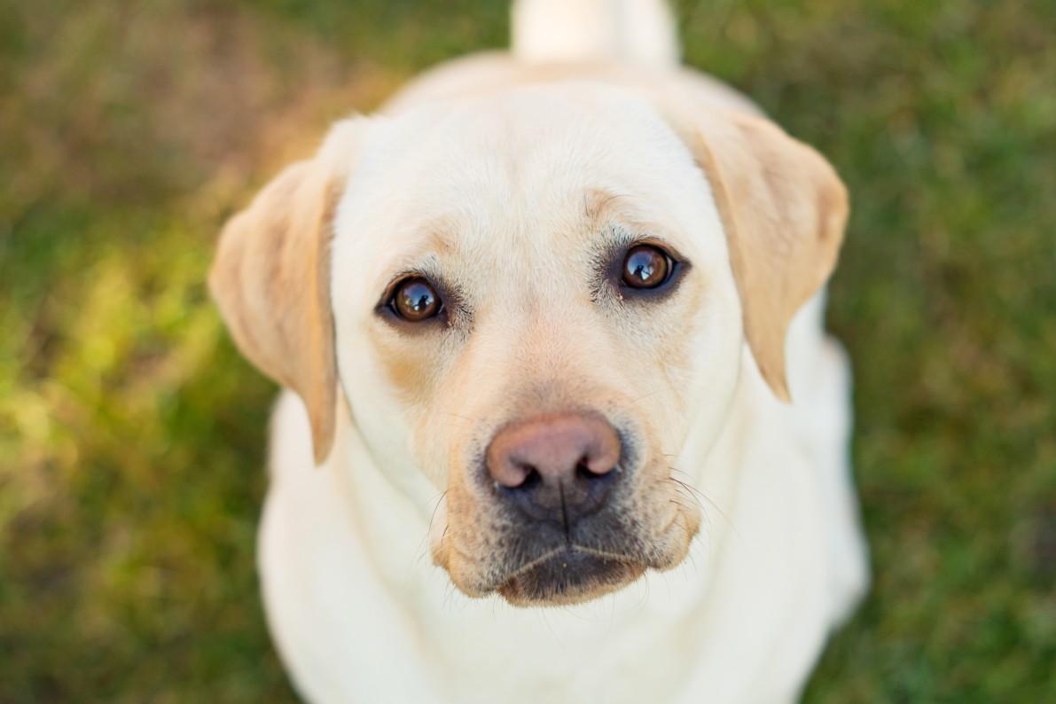 Dog Detox Skin Allergy Symptoms
