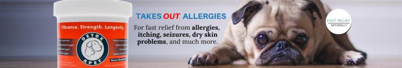 old dog seizures