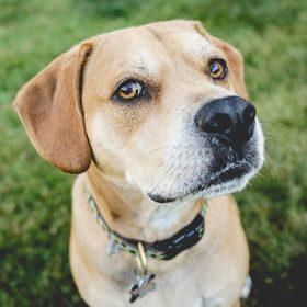 pet detoxification, dog detox, detox for dogs, detox for cats