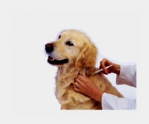 Detox your dog, pet detoxify